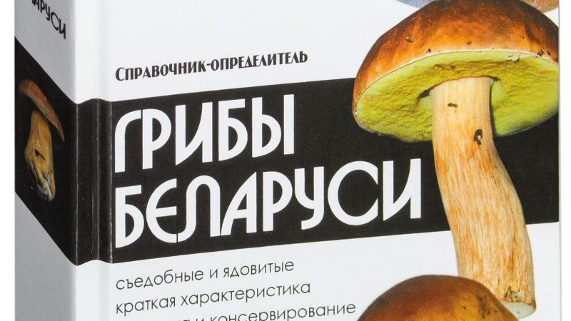 Грибы Беларуси