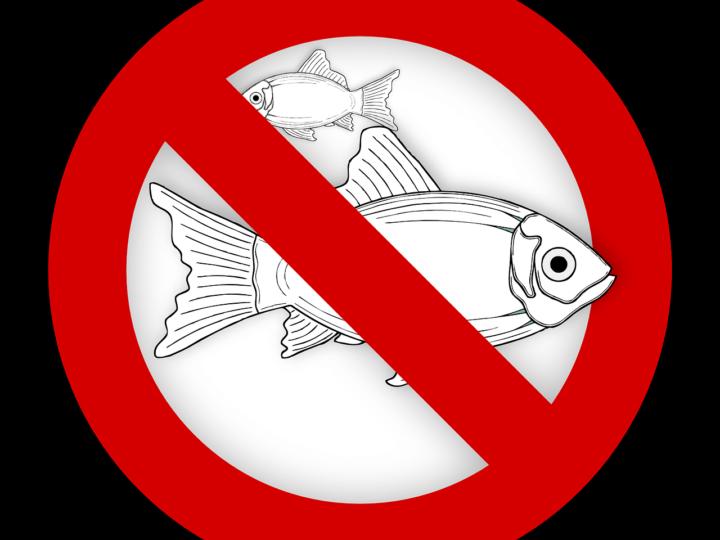 Запрет на рыбалку в 2021 году